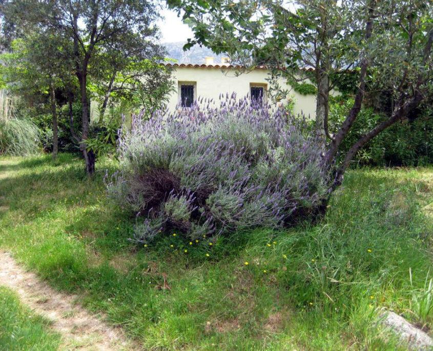 Villa Asphodèle - Françoise Marceul